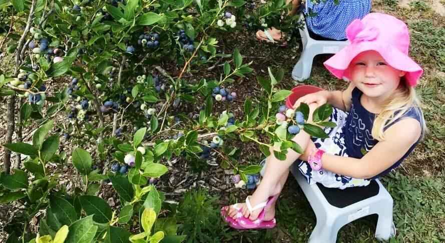 U-Pick, We Pick, Everyone Picks – Fresh Fruit this Summer